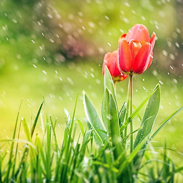 I hear the sound of abundance of rain - Healed Nations